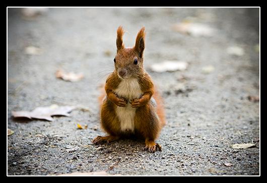 zdjęcia wiewiórek