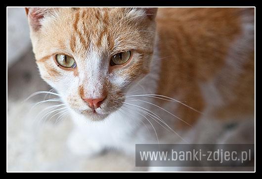 zdjęcia dzikich kotów