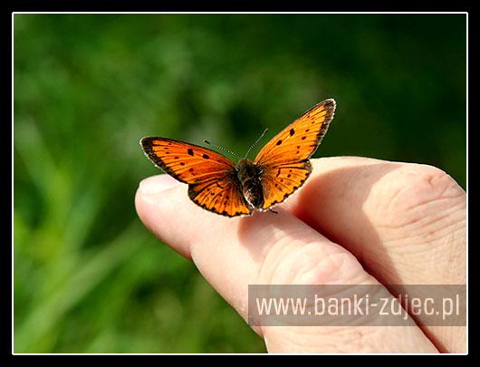 zdjęcia motyli na ręce